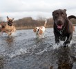 Socialization: Your dog has no friends