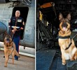 The Heroic Story of Lucca the Military Dog