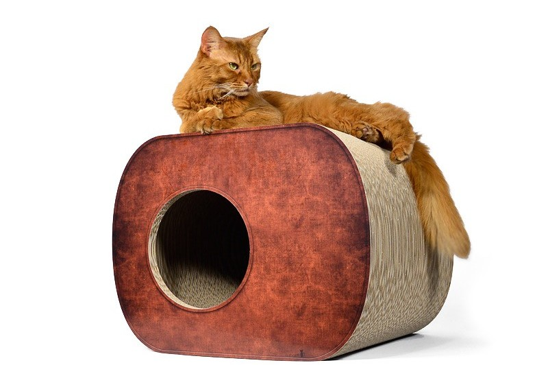 Cats – Creature Comforts